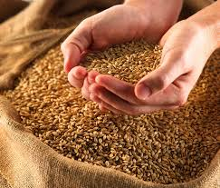 Узбекистан импортировал более 1 млн тонн пшеницы из Казахстана в этом году