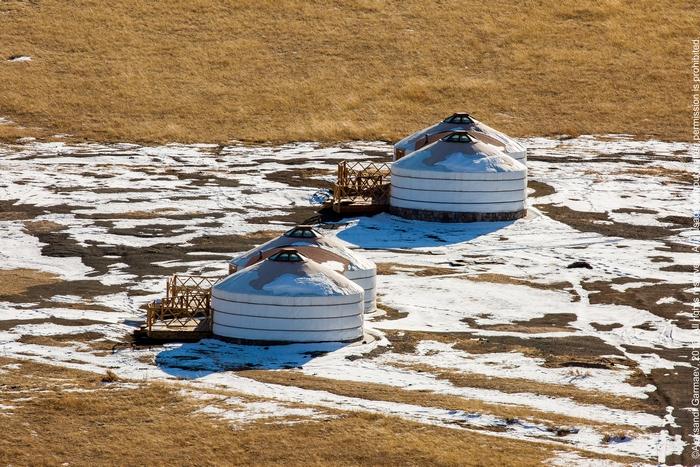 В Монголии из-за ухудшений условий зимовки погибло 125 тыс голов скота