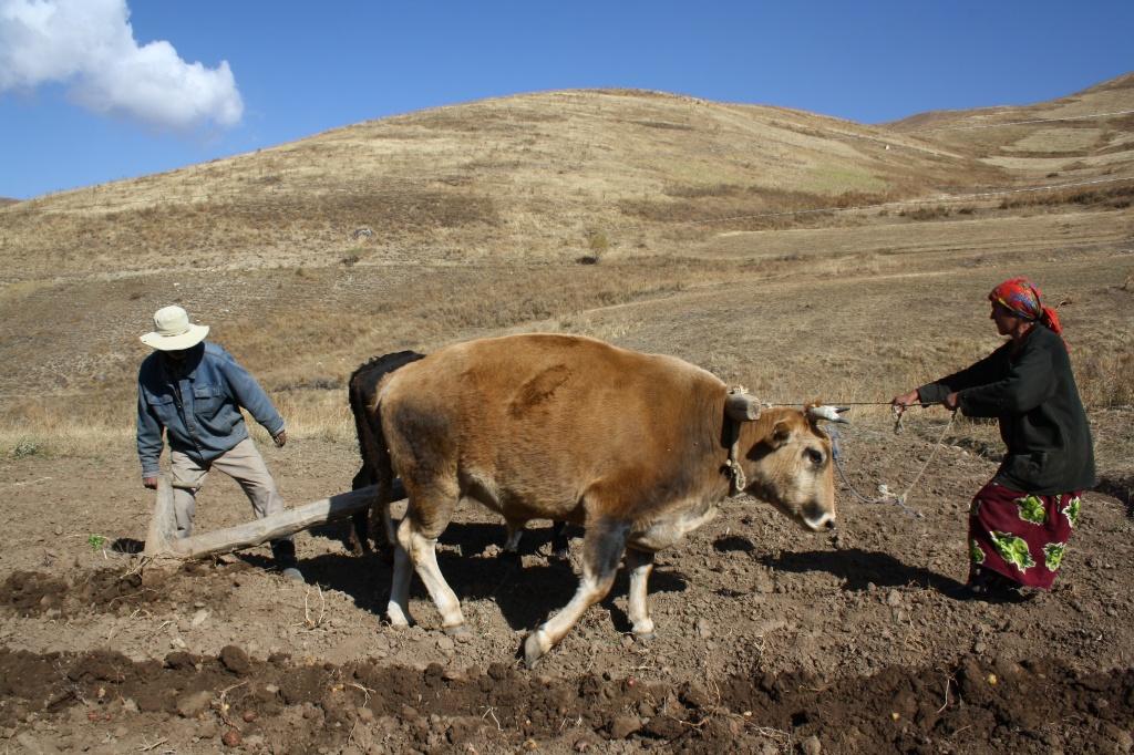 Таджикски жена изменяет мужу и приехал муж 17 фотография