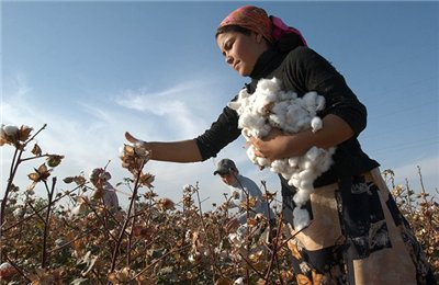 В Таджикистане по состоянию на начало октября собрано свыше 162 тыс. тонн хлопка