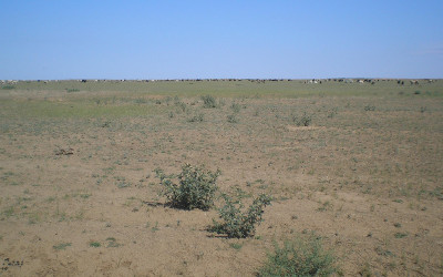 pasture degradation