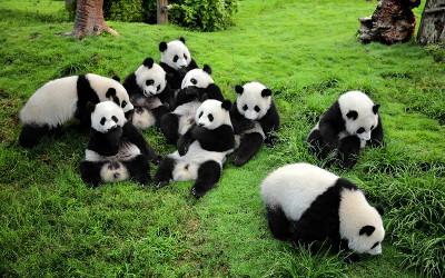 Chengdu-Panda-Base-Sichuan