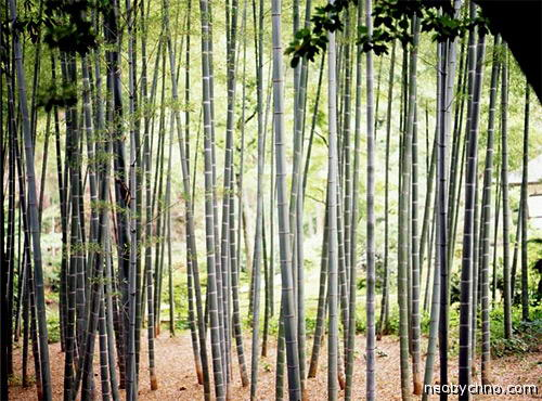 01-bamboo