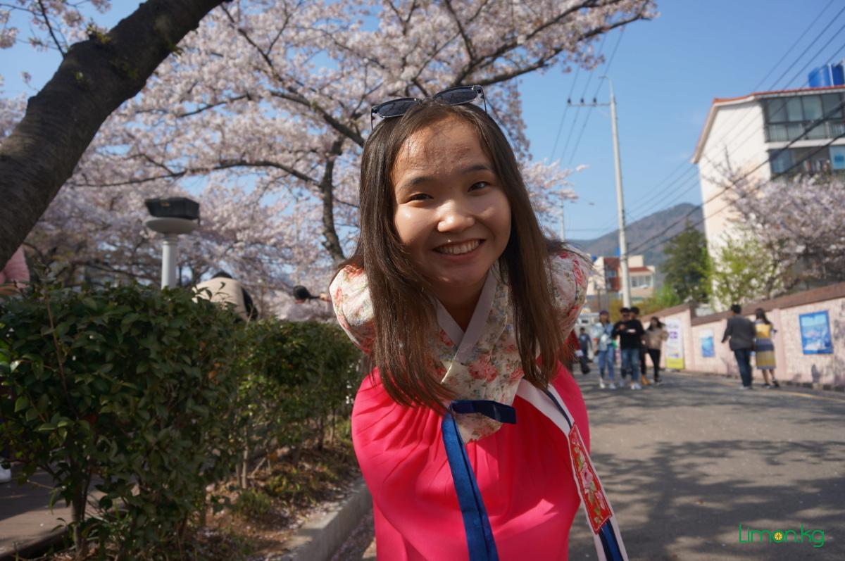 cherry blossom festival, 2017