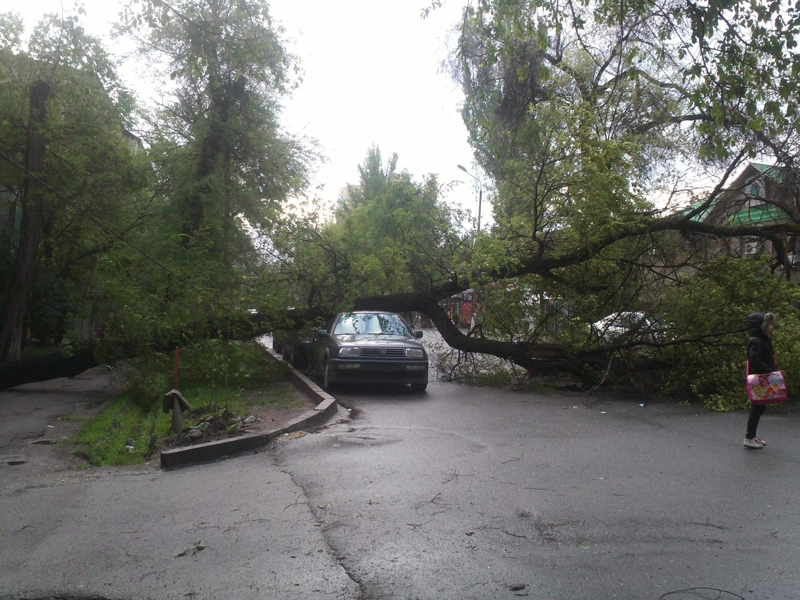 Дерево упало на машину фото