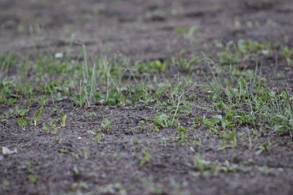 http://static.akipress.org/127/.storage/sport/images/futbol/Sbornaya-KP/ChM-2018/Remont_stadiona/30_marta/402d348d37280a3eb6d6c30591cddd84.JPG