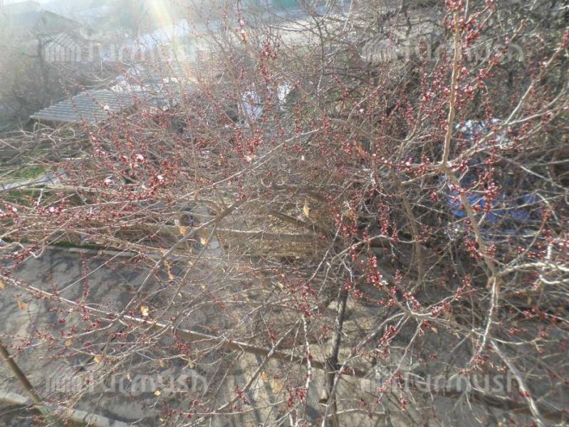 Погода в кировской области пгт опарино кировской области