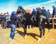 In total, the 2016 Issyk-Kul Farmers' Festival attracted some 300 farms who presented their cattle and small ruminants, tree saplings and flower crops. Fish farms and beekeepers organized the sale of their products.