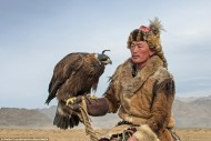 The Kazakhs of the Altai mountain range in western Mongolia are the only people that hunt with golden eagles, and today there are around 400 practising falconers.