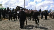 The expert commission evaluated the horses in their categories.