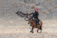 'They will then start to accept food from humans and when trust between hunter and bird is gained, the hunter will start training the eagle.