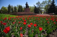 Flowers started blooming in Bishkek finally