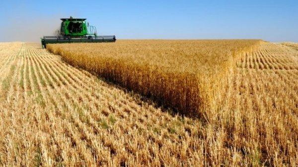 Казахстан планирует экспортировать 9 млн тонн зерна в 2016 году