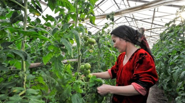 АБР предоставит Узбекистану заем в $154 млн для стимулирования плодоовощеводства