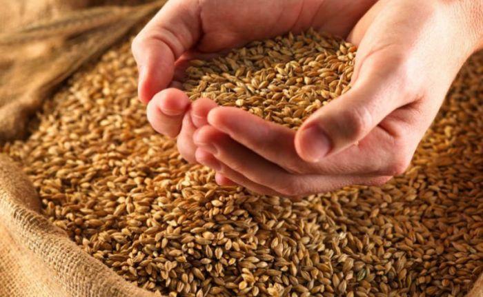 ФАО улучшила прогнозы по мировому производству зерновых