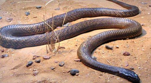 snake-species-mexico