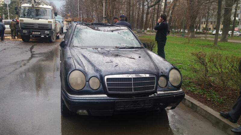 В Бишкеке сильный ветер повалил деревья на автомашины (фото)