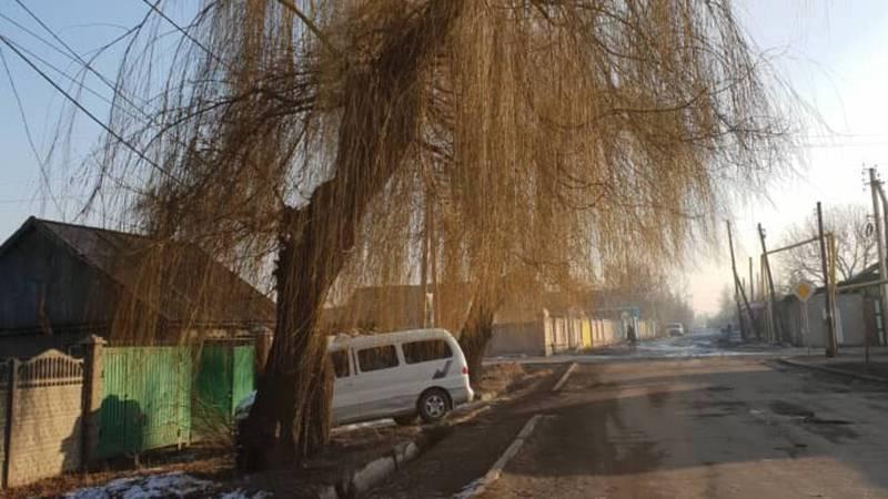 В селе Новопавловка на Абаканская - Белгородская два дерева и столб могут упасть - житель (фото)