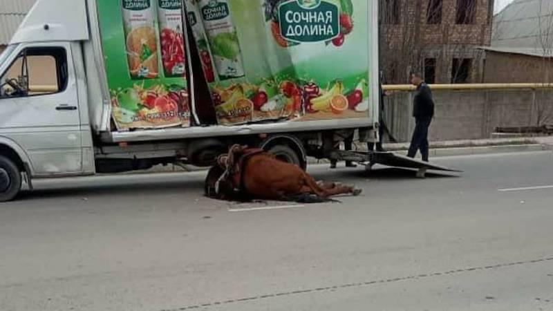 Всадник на лошади вылетел на перекресток и столкнулся с грузовиком. Лошадь умерла. Видео, фото