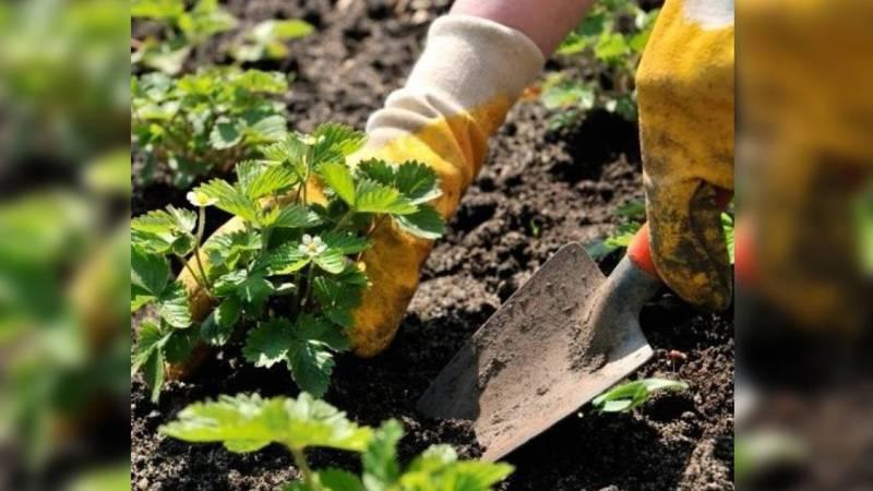 Можно ли сажать сельскохозяйственные культуры? – горожанин