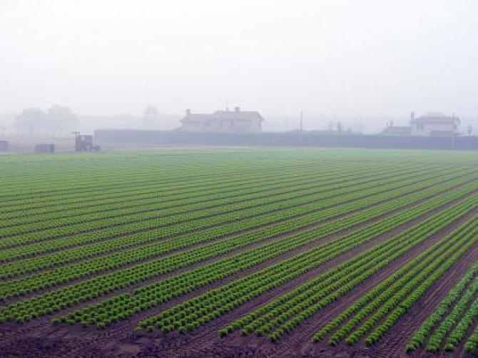 Аренда участка под сельское хозяйство
