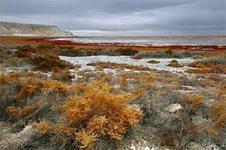 Узбекистан наладил экспорт биопродуктов из высыхающего Аральского моря в Китай и США