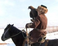 When the eagle gets used to a man's hand, the hunter takes long walks with the bird to teach it to stay calm during long field trips and hiking tours. The eagle can be brought into a house, to crowded places, in the midst of cattle. Gradually, the bird gets used to people and noise, it is not afraid of barking dogs.