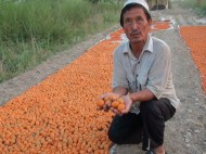 Batken apricots are mainly purchased by Tajikistan. The buyers come in autumn and buy the fruit at cheaper price. They usually resell it to Russia and other foreign countries.