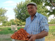 After collecting the apricots, weddings and other family celebrations may be held in the orchards.