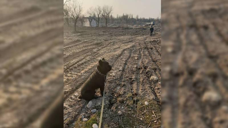 Будет ли в новом парке в Бишкеке площадка для выгула собак?