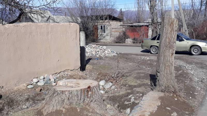 В городе Кемин массово срубают деревья, - житель