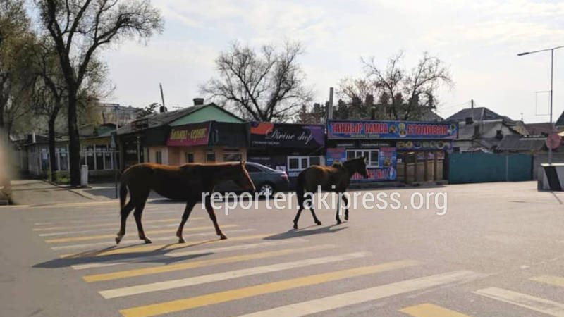Возле ТРЦ «Азия Молл» гуляют лошади. Фото