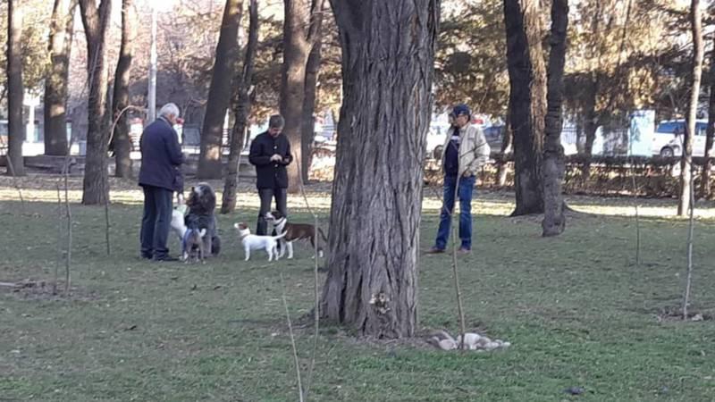 В парке Тоголок Молдо выгуливают собак и не убирают за ними, - горожанин (фото)
