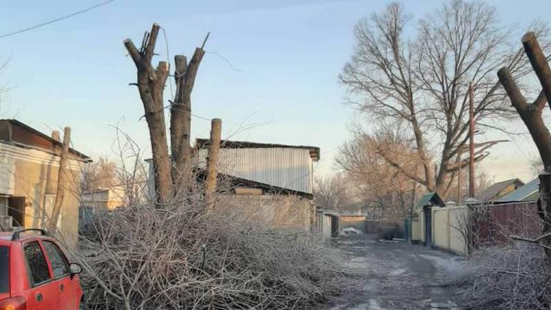 На улице Нарвской срубили молодые деревья. Фото