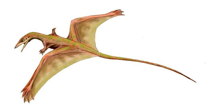 Sharovipteryx